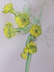 Cowslips Painting